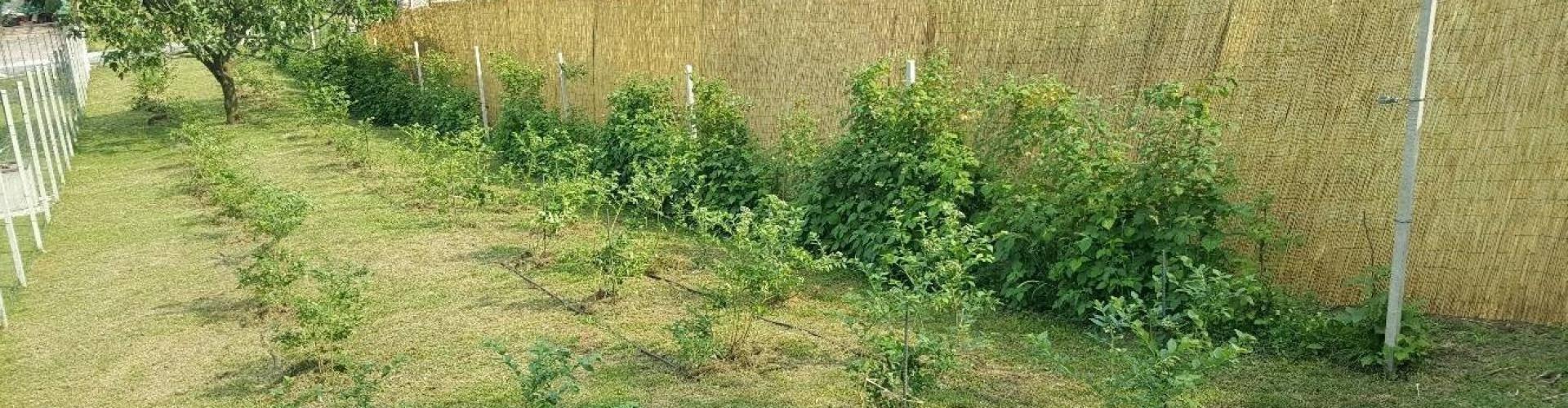 Agro-Fit - Coltivazione