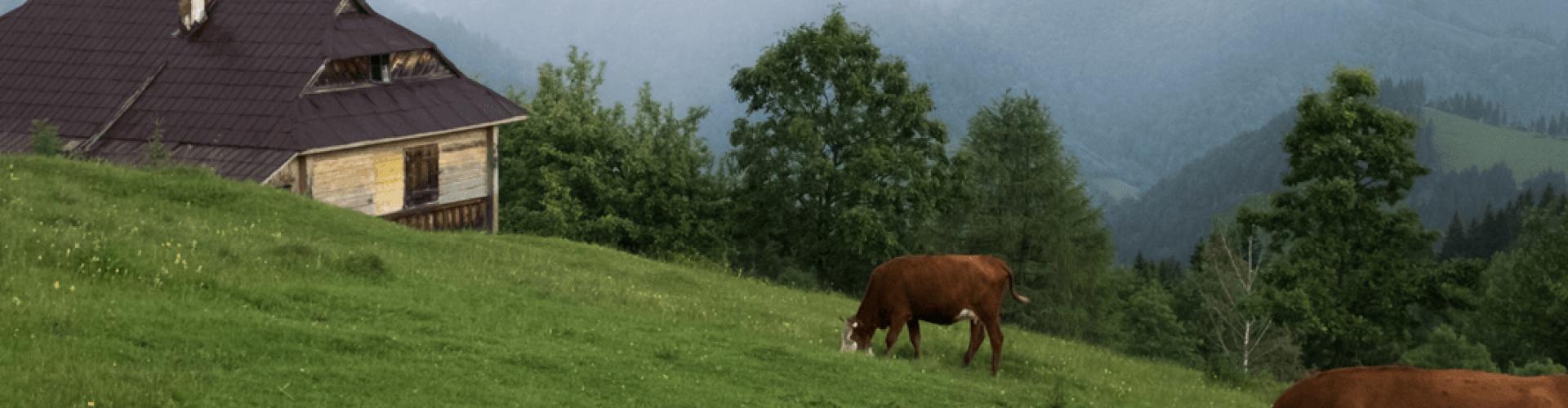 I Formaggi d'Alpeggio: bitto, casera e scimudin
