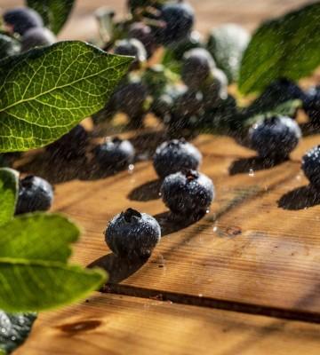 Coltivazione di prodotti biologici in Valtellina